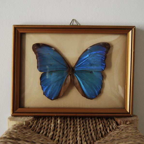 Cadre papillon verre bombé