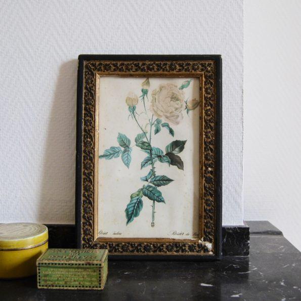 Ancien cadre avec affiche botanique